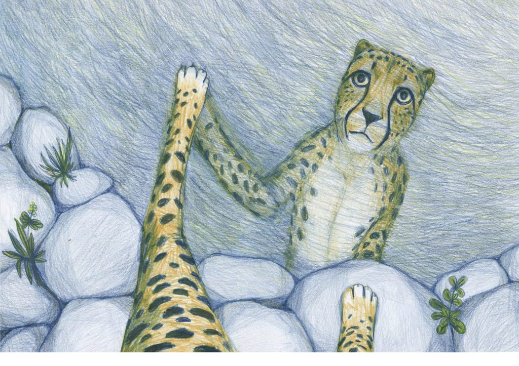 Hand-drawn colored pencil illustration of a cheetah looking at itself reflected in a lake